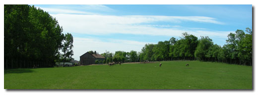 Image of our farm in summer